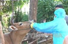 Pondrán en circulación vacuna contra fiebre aftosa producida por Vietnam