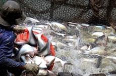 Vietnam exporta primer lote de productos acuícolas en 2018