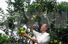 Inician construcción de fábrica de procesamiento de frutas en provincia septentrional vietnamita