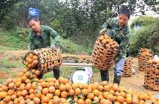 Proyecto de agricultura apoya a personas pobres en provincia vietnamita