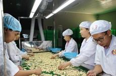 Vietnam por elevar ganancia para agricultores de anacardo