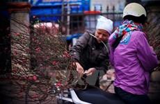 El Calendario Lunar guía la vida vietnamita