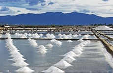 Indonesia estudia posibilidad de suspender importación de sal en 2020