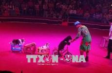 Efectúan en Vietnam primera Gala Internacional de Circo