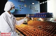 Primeros lotes de huevos limpios de la fábrica más grande de Vietnam