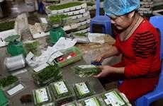 Frutas exportadoras de Vietnam obtienen estándares globales