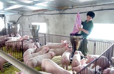 Vietnam podrá ampliar mercado ganadero durante participación en feria
