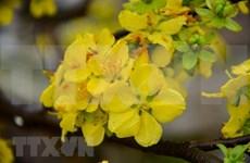 Festival de flores de Vietnam y Japón reforzará vínculos