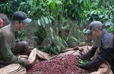 Vietnam participa en feria de té y café en Singapur