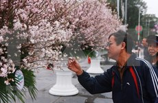 Inician actividades de intercambio cultural Vietnam-Japón
