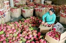 Provincia china estrecha estándares de frutas importadas de Vietnam