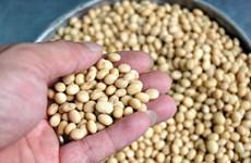 Vietnam y Australia promueven cooperación agrícola