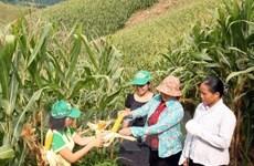 Informe de BM resalta logro de Vietnam en reducción de la pobreza