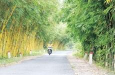 Peculiar colección de bambú en provincia vietnamita de Dong Thap
