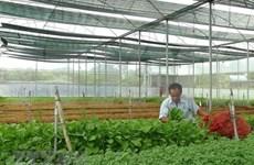 Vietnam busca reforzar marca nacional de productos hortofrutícolas