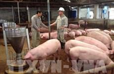 Debaten medidas para impulsar la exportación de productos ganaderos de Vietnam a Malasia