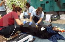 Vietnam impulsa protección de animales silvestres