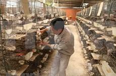 Sigue en tendencia alcista exportaciones agrosilvícolas y acuáticas de Vietnam