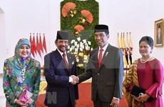 Indonesia y Brunei por fortalecer cooperación multifacética