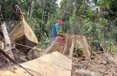 Vietnam reporta reducción de tala ilegal de bosques
