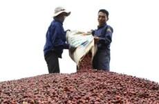 Exportaciones de café de Vietnam alcanzan mil 300 millones de dólares