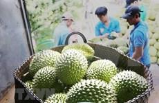Exportaciones de Tailandia experimentan aumentos en 14 meses consecutivos