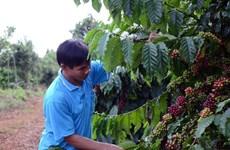 Intercambian en Hanoi medidas para impulsar comercio de productos agrícolas de Vietnam