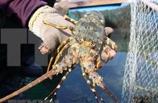 Vietnam busca medidas para facilitar exportación de camarón a Estados Unidos
