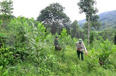 Destacan papel de organizaciones sociales en impulso de silvicultura comunitaria en ASEAN