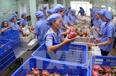Aumentan exportaciones hortofrutícolas de Vietnam en primer semestre del año