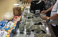 Detectan en Vietnam varios casos de tráfico de marihuana en aeropuerto de Tan Son Nhat