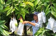 Vietnam trabaja para convertir el mango en un producto clave de exportación