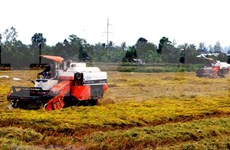 Vietnam exporta más de tres millones  de toneladas de arroz en primer semestre de 2018