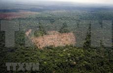 China y Camboya fortalecen cooperación en protección del medio ambiente