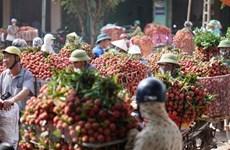 Bac Giang exporta su lichi a 30 países