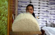 Exportaciones de arroz de Camboya se redujeron en primer semestre de 2018