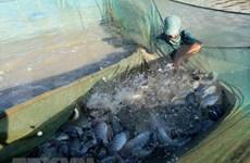 Medio Oriente,  mercado potencial para los mariscos vietnamitas