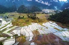 Vietnam se esfuerza por minimizar pérdidas de cosechas ante intensas precipitaciones