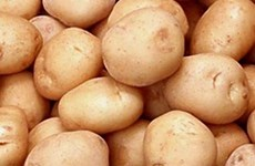 El 60 por ciento de patatas procesadas en Vietnam son importadas