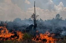 Indonesia acelera prevención contra incendios forestales en vísperas de ASIAD18