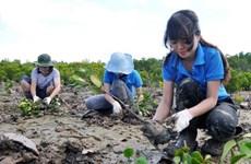 Vietnam promueve inversiones para cumplir meta de plantación forestal costera
