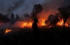 Detectan numerosos puntos de calor en Indonesia