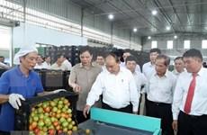 Premier de Vietnam visita modelo de cultivo de verduras limpias