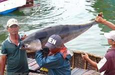 Vietnam continúa esfuerzos por el desarrollo sostenible de la pesca