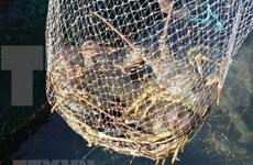 Muchos desafíos aguardan la exportación de camarón de Vietnam a Estados Unidos