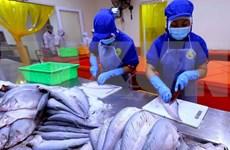 Exportaciones de productos acuícolas de Vietnam crecen 6,3 por ciento