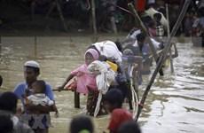 Japón y Myanmar debaten sobre crisis de los rohingyas