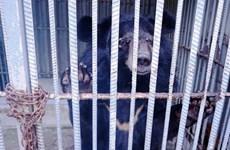 Provincia vietnamita cierra última granja privada de bilis de oso