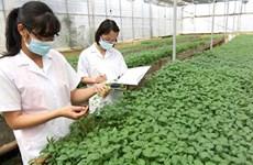 Prefectura japonesa aspira a cooperar con ciudad vietnamita en sector agrícola