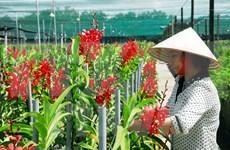 Vietnam, destino atractivo para empresas extranjeras interesadas en agricultura inteligente